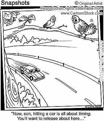 birdpoop